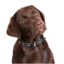KONG juguete para cachorros Puppy activity ball