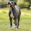 IRCVET complemento nutricional renal para perros y gatos.