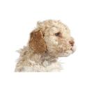 Pienso para perros Dingo Adult&Daily