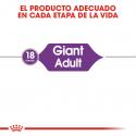 Giant Adulto Razas Gigantes (6)