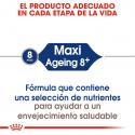 Maxi Ageing +8 Años Razas Grandes (1)