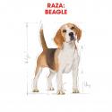 Royal Canin-Beagle Adulto (1)