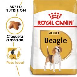 Royal Canin-Beagle Adulto (1)