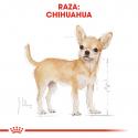 Royal Canin-Chihuahua Adulto (1)