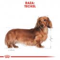 Royal Canin-Teckel Adulto (1)