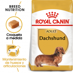 Royal Canin-Teckel Adulto (1)