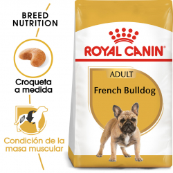 Royal Canin-Bulldog Francés Adulto (1)