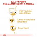 Golden Retriever Adulto (6)