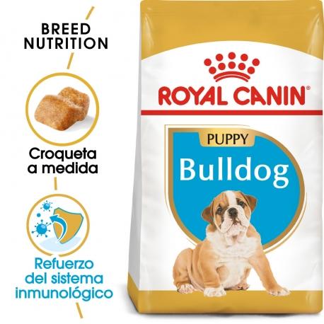 Bulldog Ingles Cachorro (1)