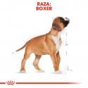 Boxer Junior (1)