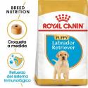 Royal Canin-Labrador Retriever Cachorro (1)