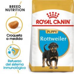 Rottweiler Cachorro (1)