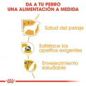 Royal Canin-Yorkshire Terrier Adulto (1)