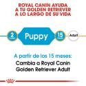 Royal Canin-Golden Retriever Cachorro (1)