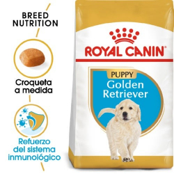 Royal Canin-Golden Retriever Cachorro (1)