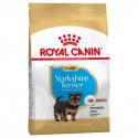 Yorkshire Terrier Cachorro (1)