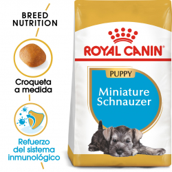 Royal Canin-Schnauzer Miniature Cachorro (1)