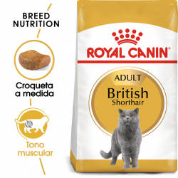 Royal Canin-British Shorthair Adulto (1)