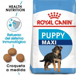 Maxi Junior Cachorros Razas Grandes (18)