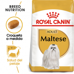 Royal Canin-Bichon Maltese Adulto (1)