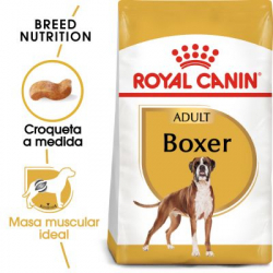 Boxer Adulto (10)