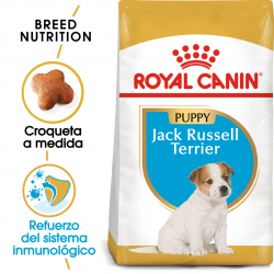 Royal Canin-Jack Russell Cachorro (1)