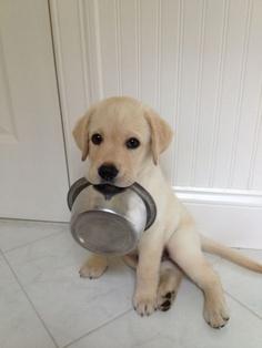 Pienso para perros de marcas Premium